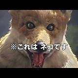 chi_(^_^)