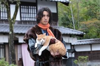 忍者×猫のコラボでほっこり「猫侍」
