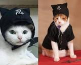 猫好き集まれ! 「猫忍」あなご&金時の萌えキュン場面カット42枚一挙公開!