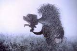 霧の中のハリネズミ
