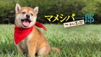 映画版 マメシバ一郎 フーテンの芝二郎