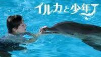 イルカと少年